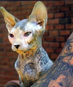 tattooed pet and owner